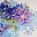 nancy_mclean_watercolours_clematis -vines