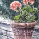nancy_mclean_geranium_and_terra_cotta