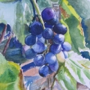 nancy_mclean_grapes