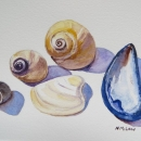 Seashells- Nancy McLean Watercolours