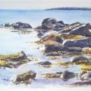 nancy_mclean_rocks_and_seaweed